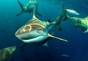 2 night Aliwal scuba dive break in South Africa including 3 reef dives and double en suite room