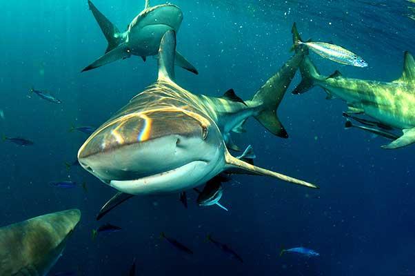 2 night Aliwal scuba dive break in South Africa: Double en suite