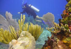 Scuba Dive in Cancun