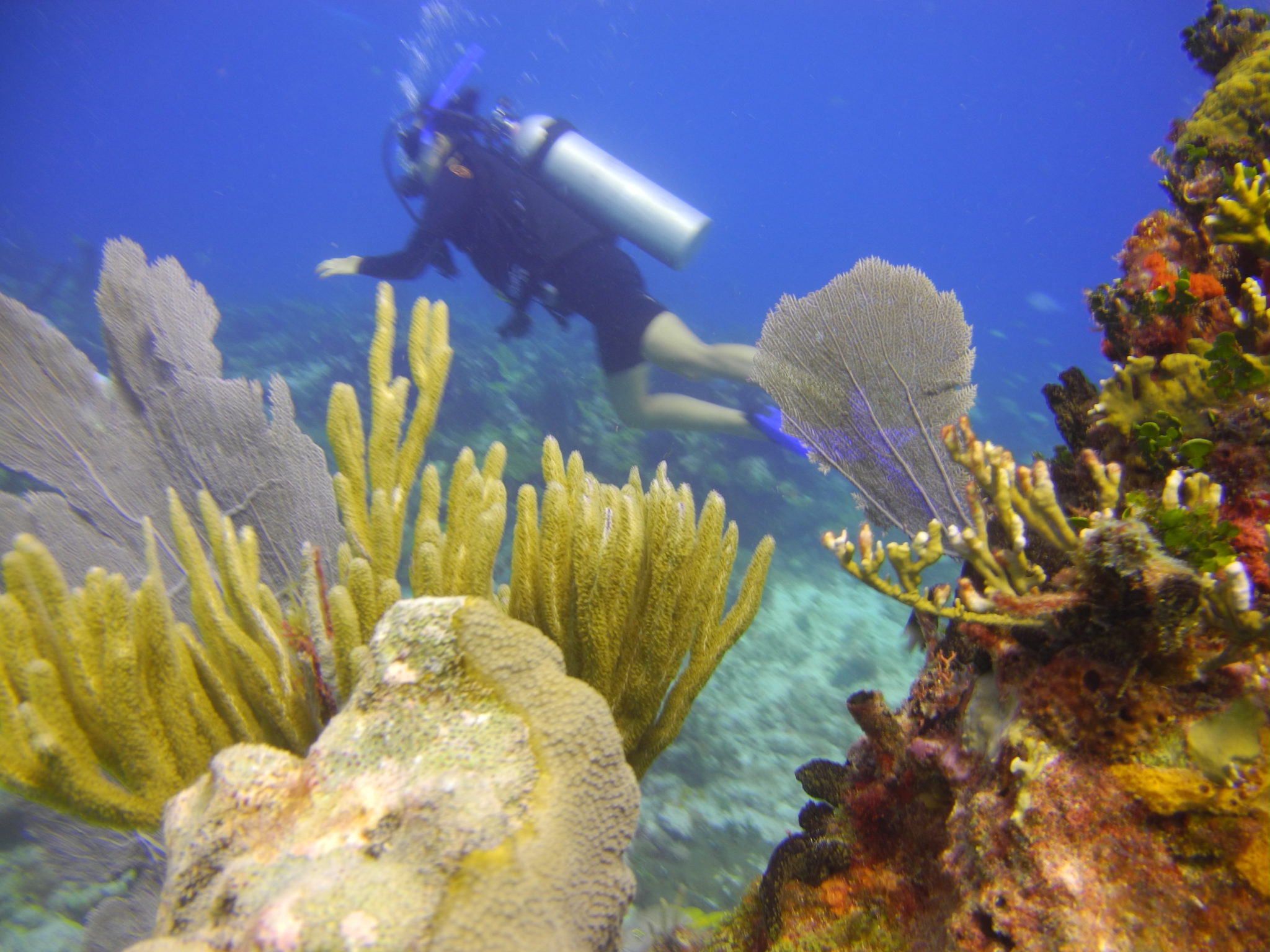Two Reef Scuba Dive in Cancun: Scuba Diving in Mexico