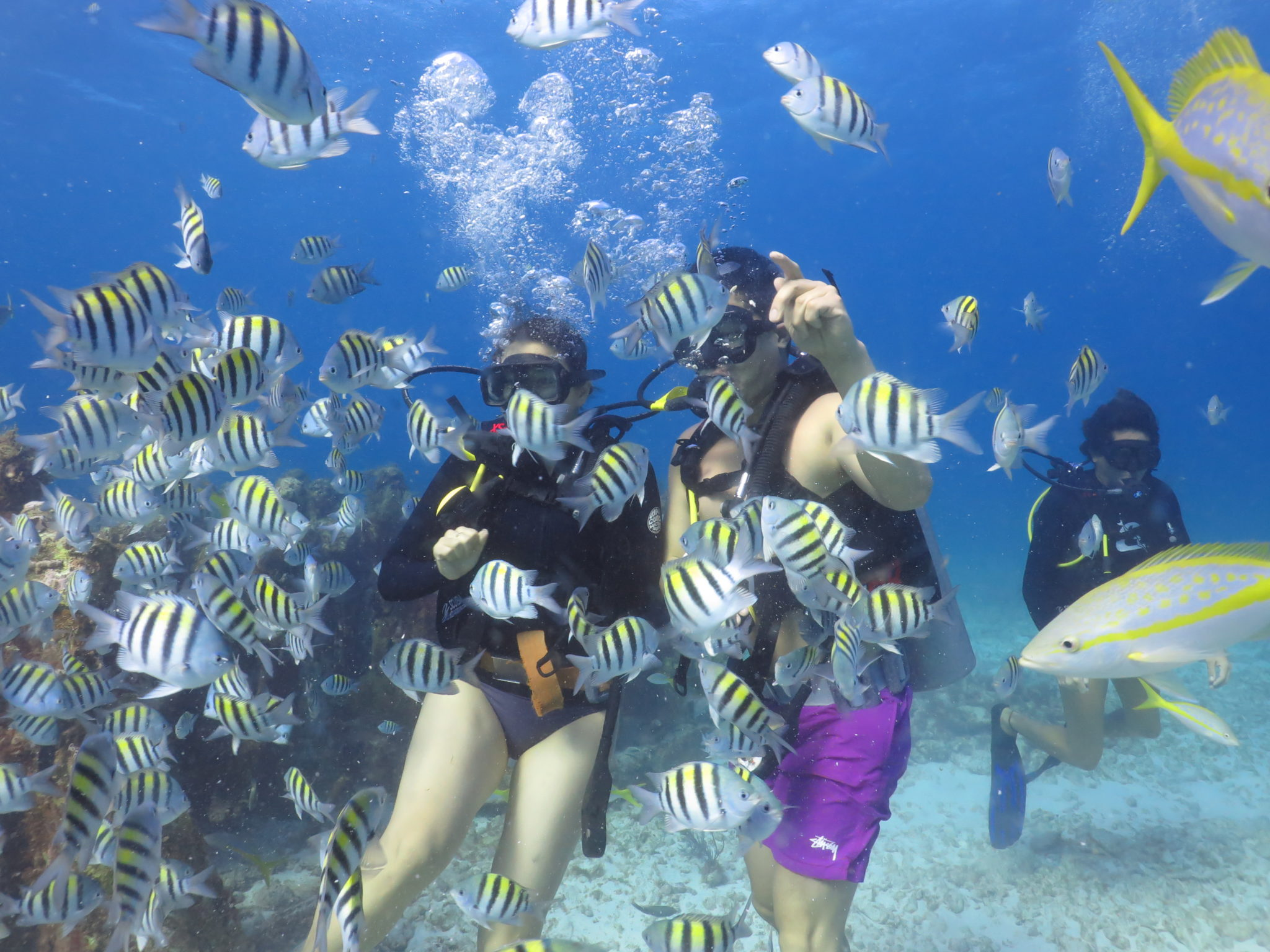 PADI Open Water Diver Course in Cancun: Scuba Diving in Mexico