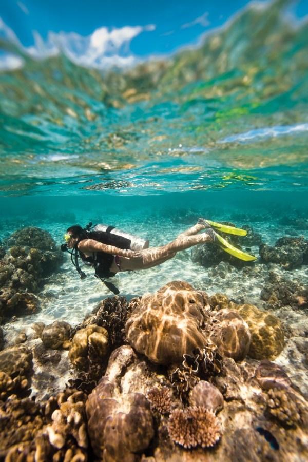 Discover Scuba Diving in Florida: Scuba Dive at Key Largo