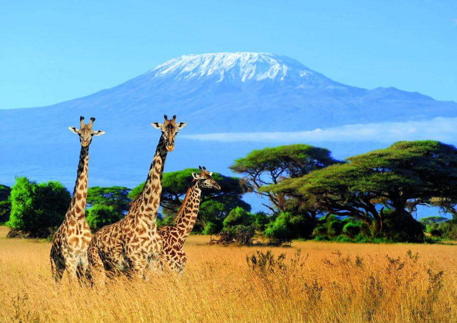 Kilimanjaro trekking adventure: 6 day Machame trek in Tanzania