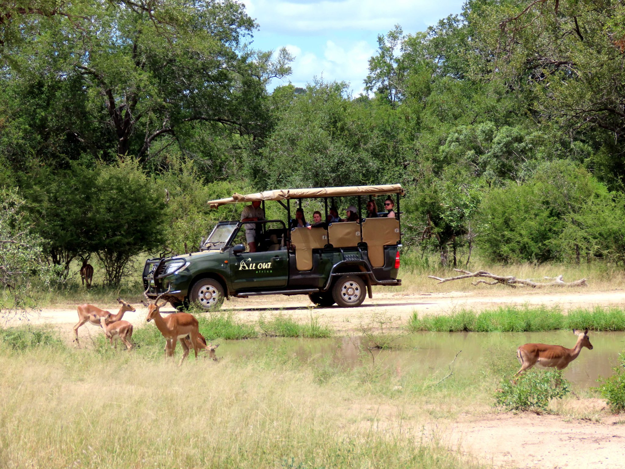 Guided South African day safari in Kruger National Park