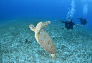 scuba dive in Mexico