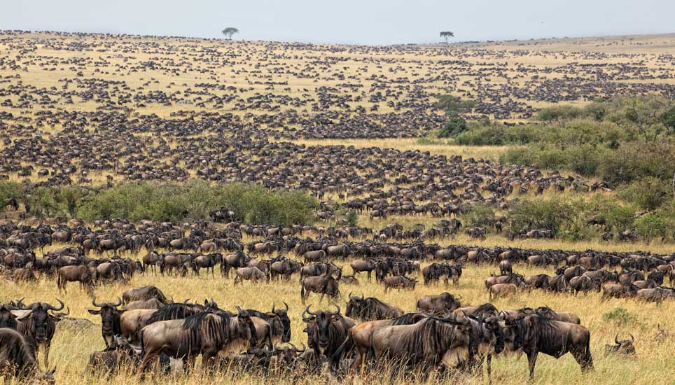 Tanzania safari adventure: Serengeti Wildebeest migration holiday