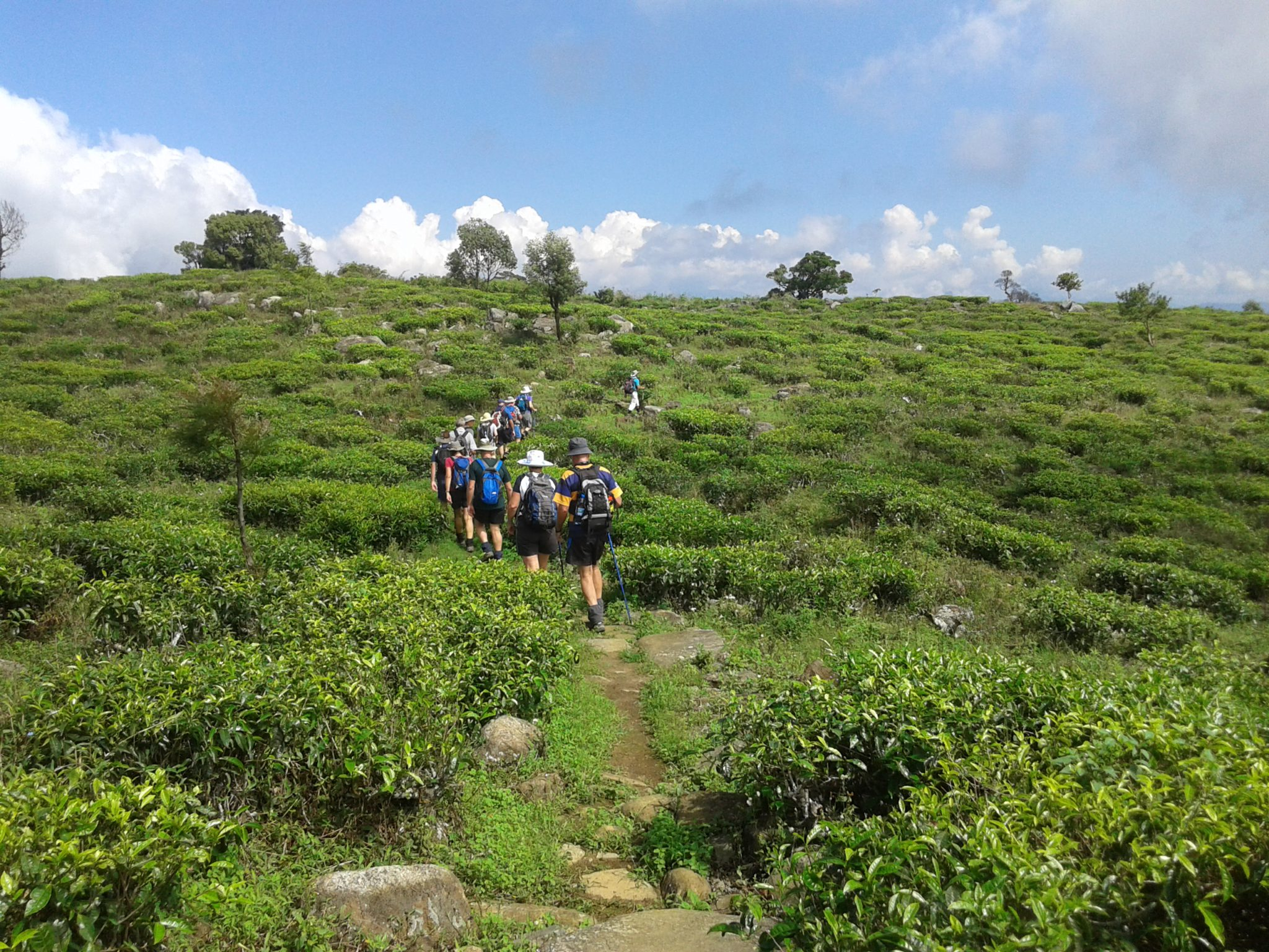 Sri Lanka hiking experience: Tea plantation hike and picnic trip