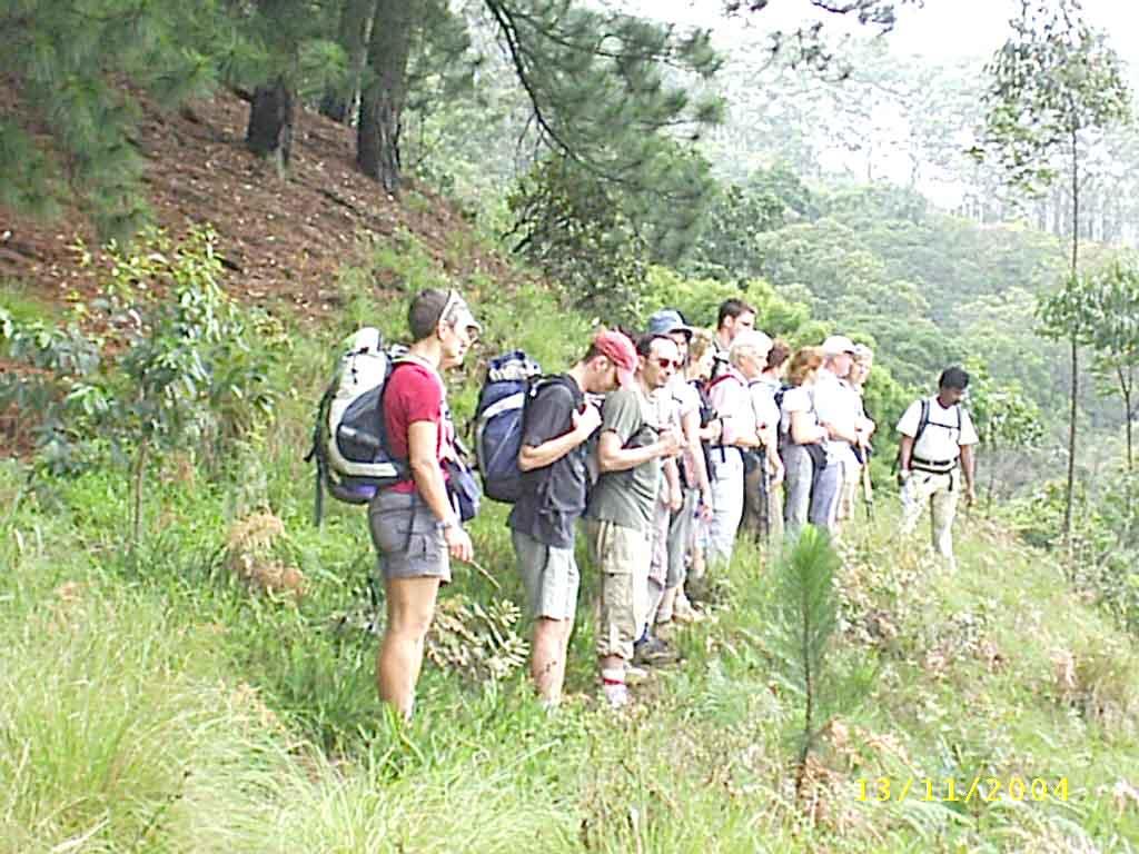 Sri Lanka hiking day trip: Hike forest, Mountain & Tea Plantation