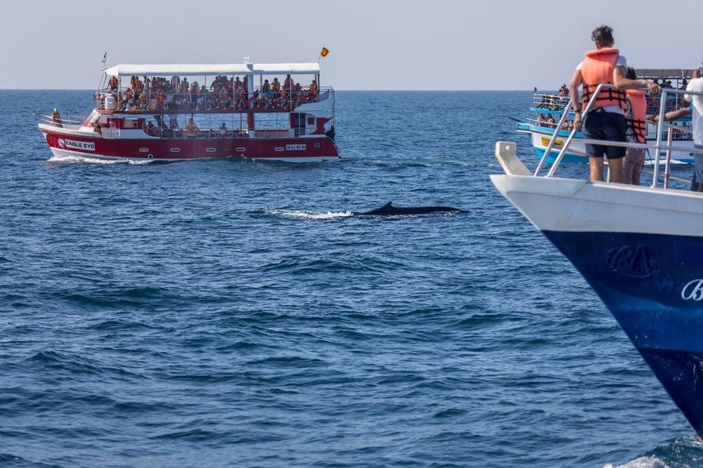 5* land & sea safari holiday in Sri Lanka: Blue whales & leopards