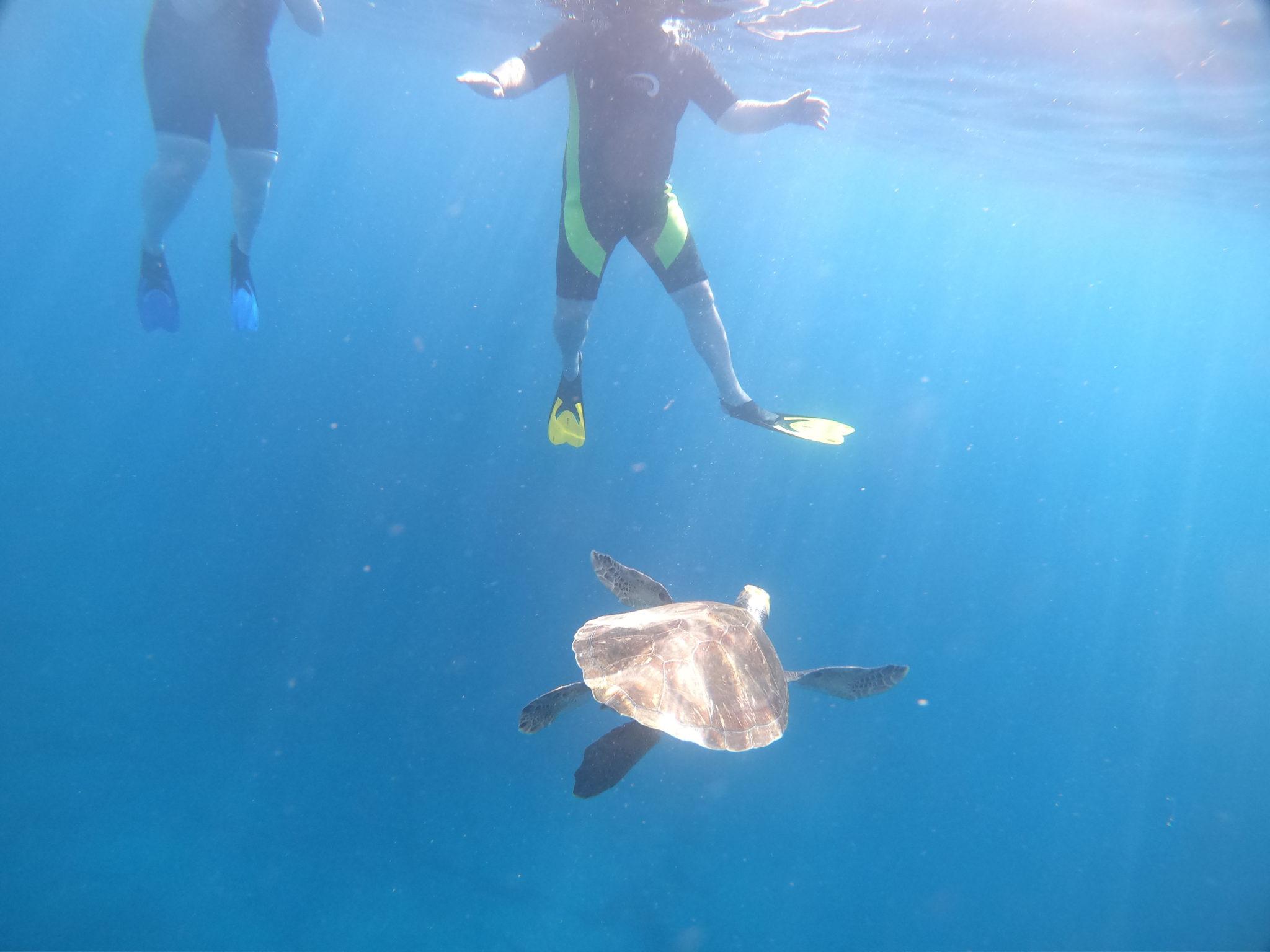 Tenerife turtle snorkeling experience: Costa Adeje boat trip