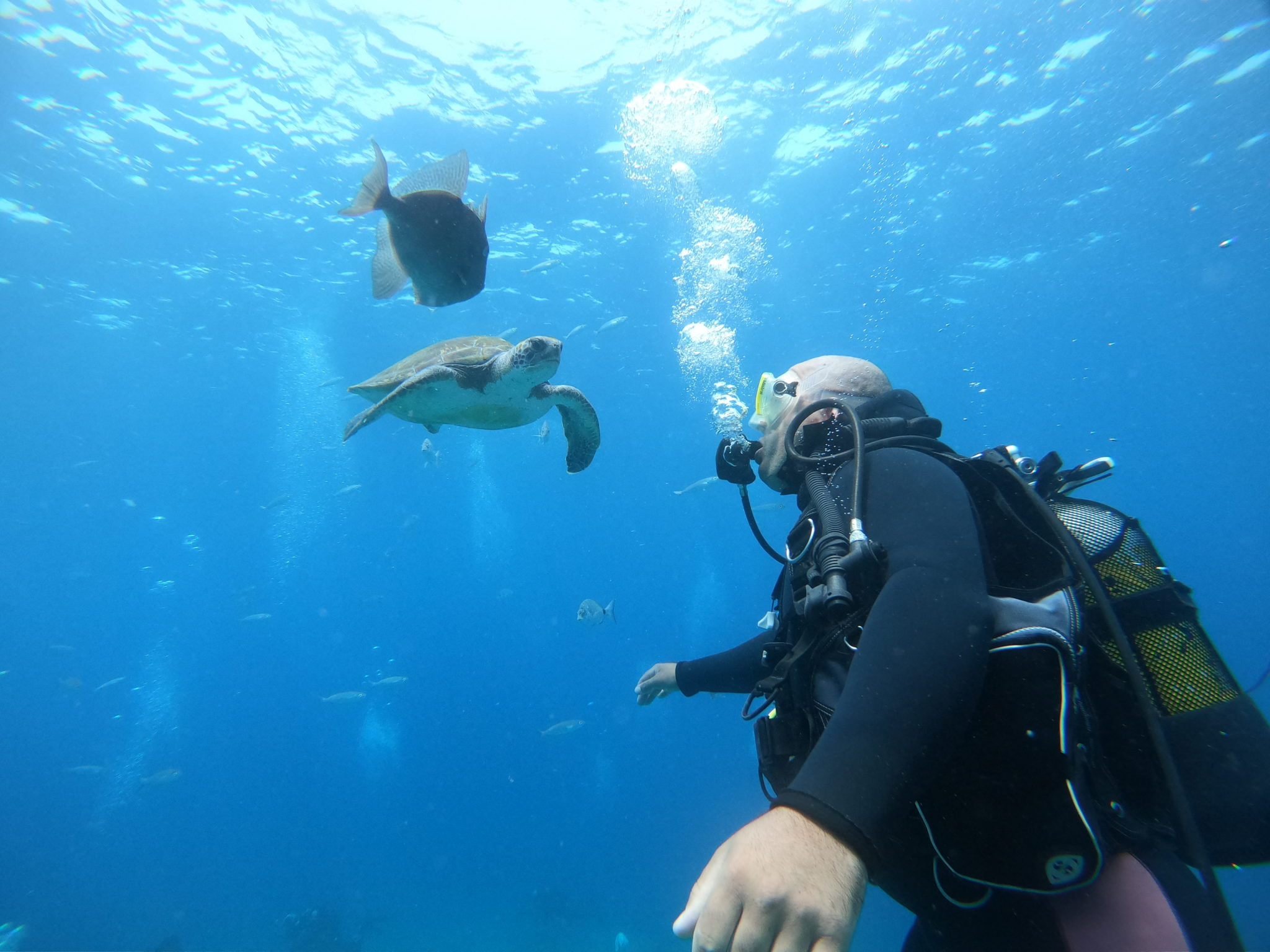 Try scuba diving in Tenerife: Beginner dive experience in Adeje