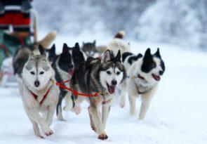 multi activity Swedish Lapland holiday