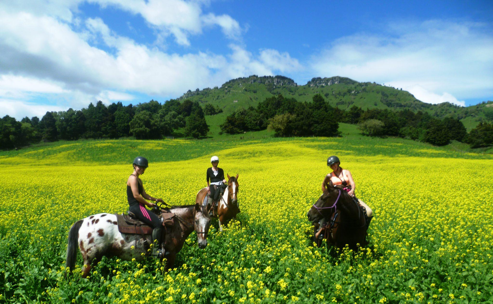 Harmony With Horses: Half day New Zealand horse riding experience
