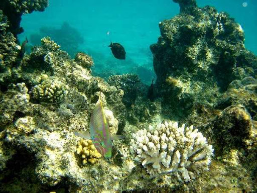 Red Sea boat tour and snorkelling in Ras Mohammed National Park