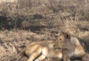 12 Days Kenya and Tanzania Bush Safari Experience