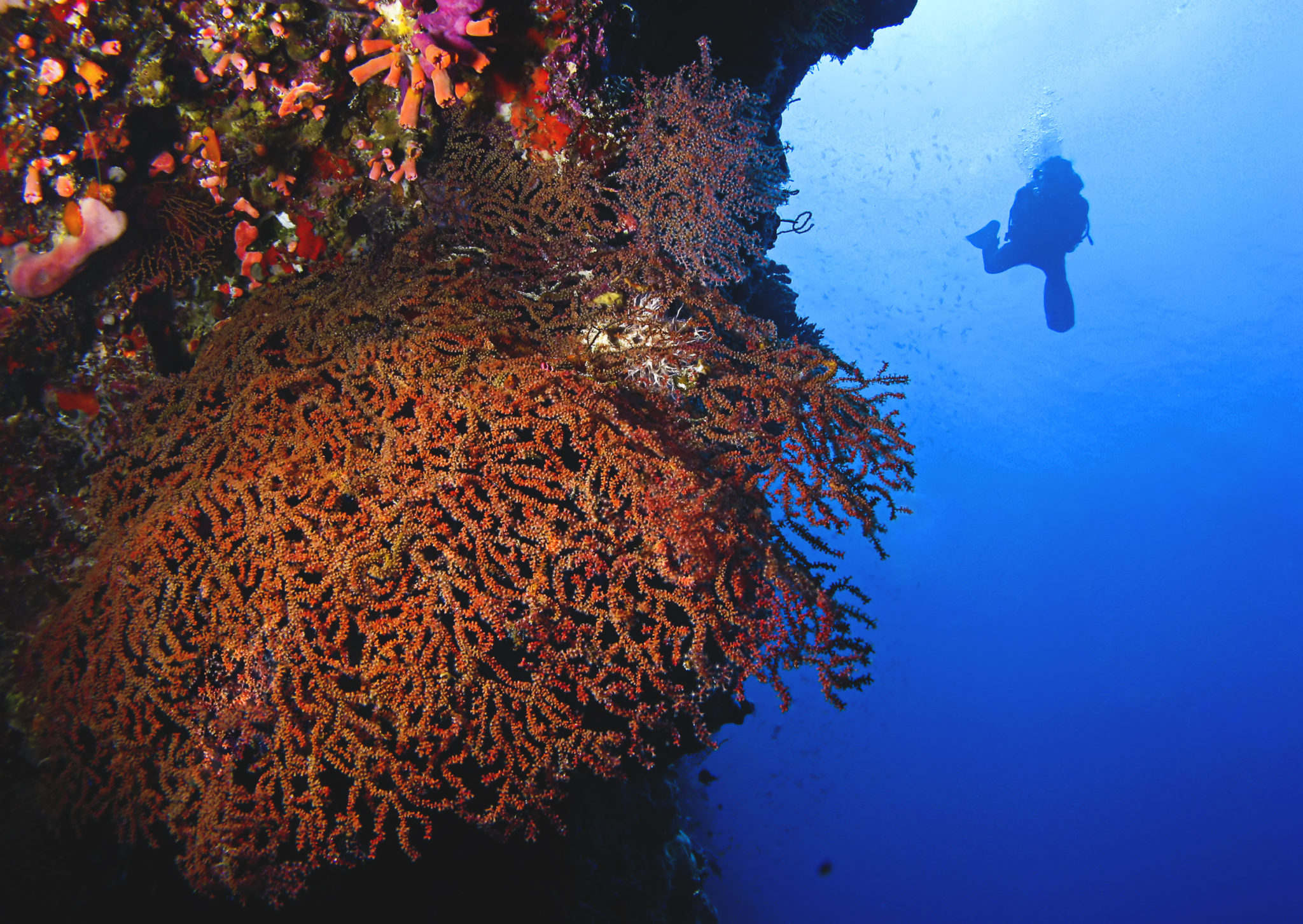 Advanced Adventurer: Maldives scuba diving courses in Maalhos