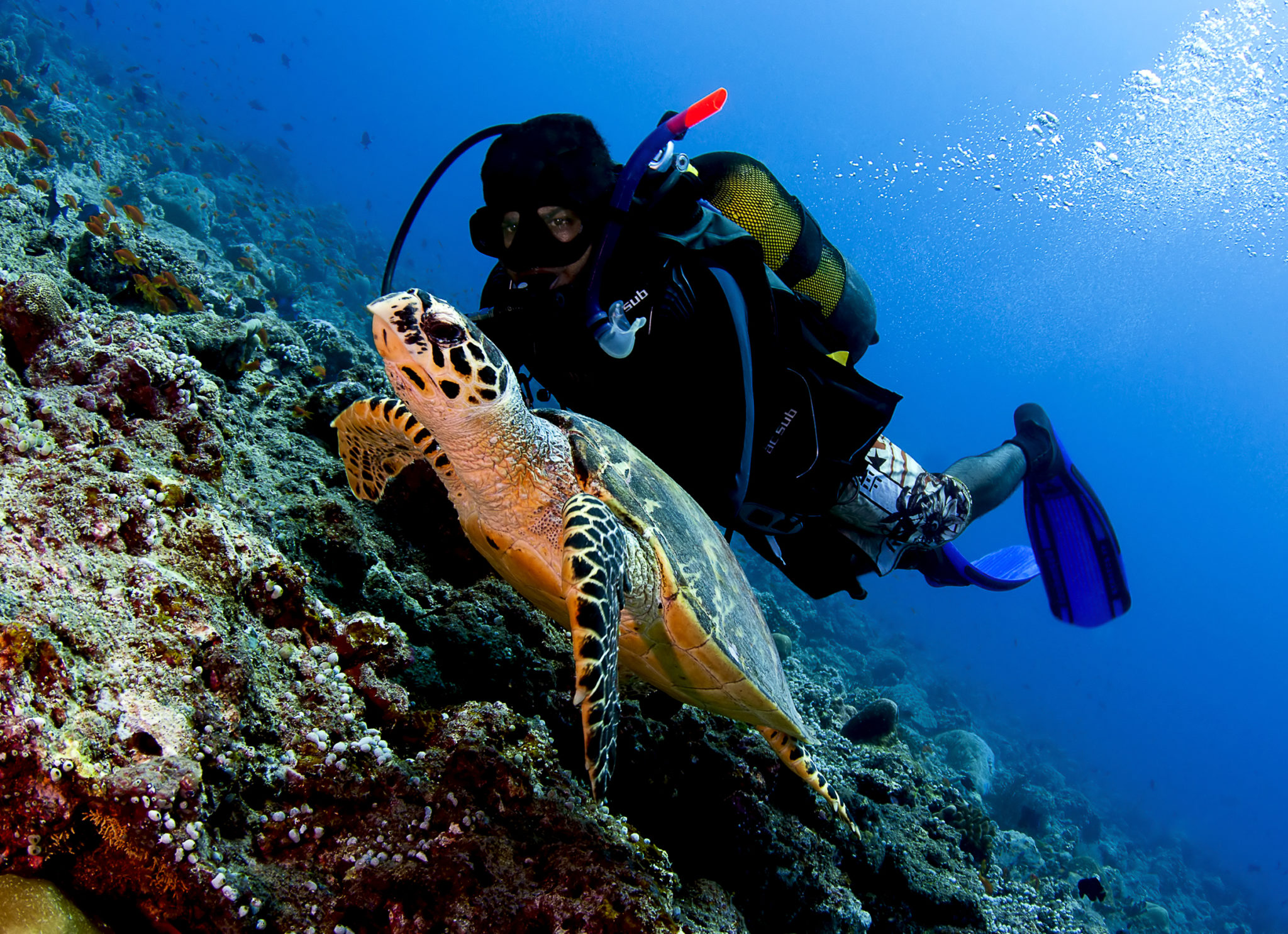 Maldives Open Water Diver Course in Baa Atoll Biosphere Reserve
