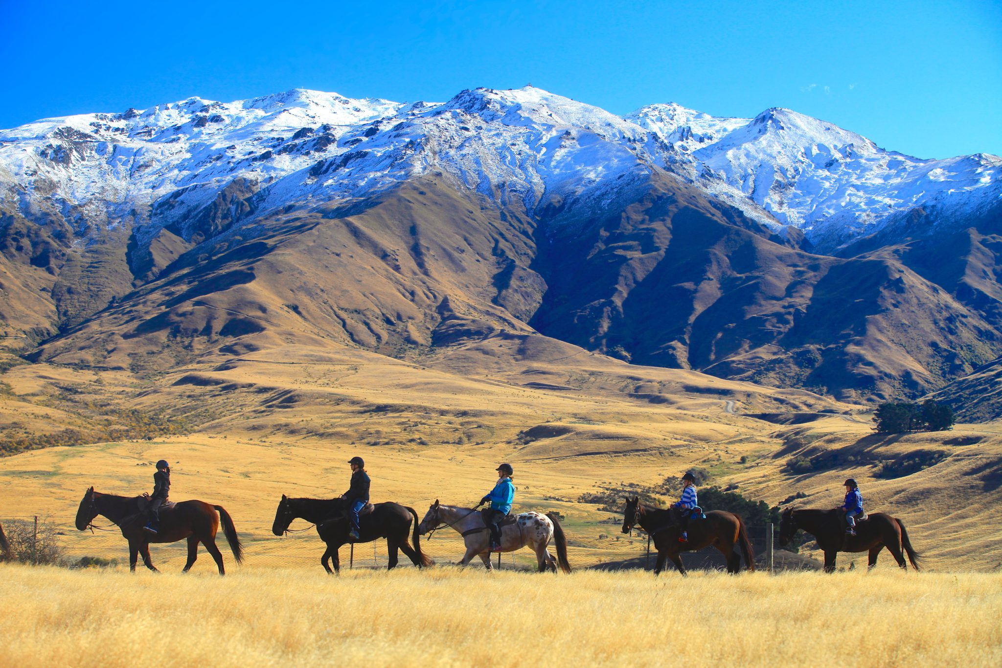 2hr New Zealand Gold Discovery Horse Trek Trail (Cardrona River)