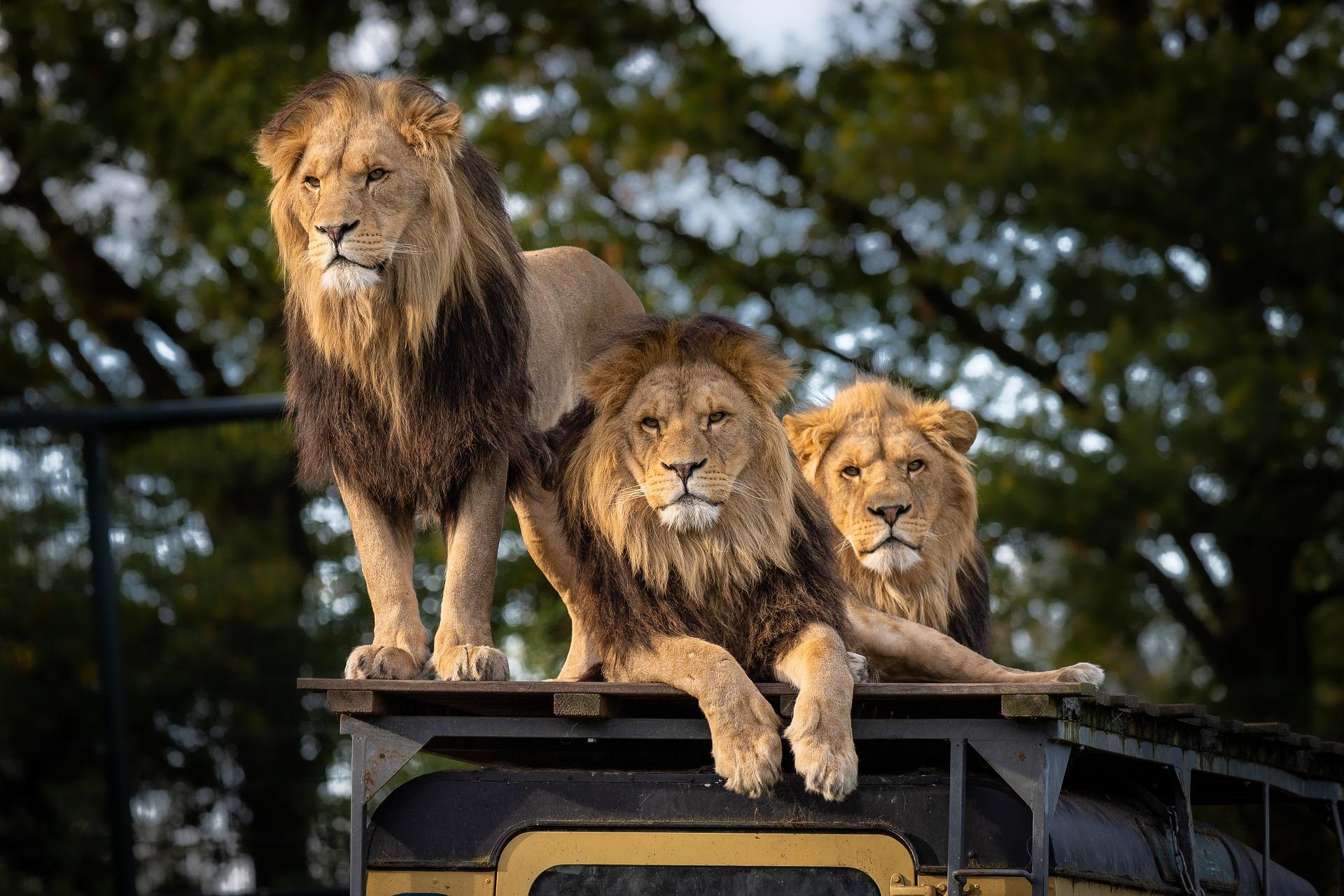 South Africa overlanding tour to Drakensburg and Kruger Park