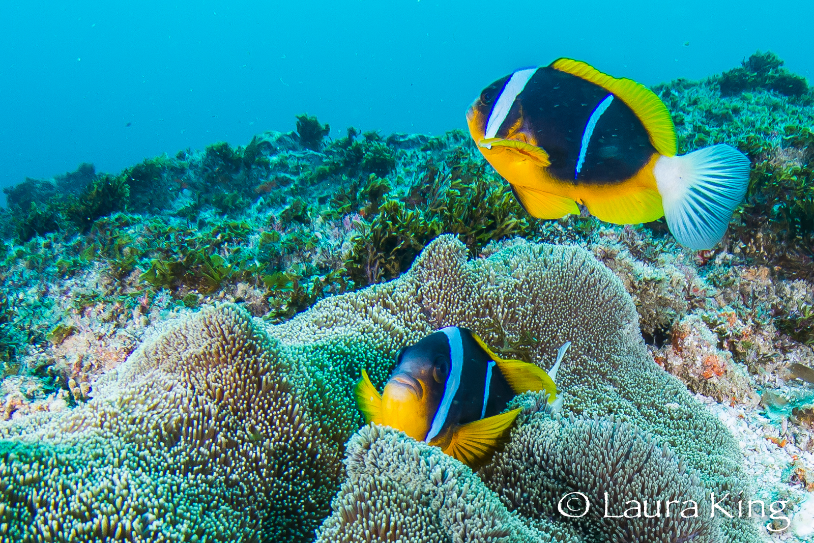South Africa Scuba Diving Holiday in Umkomaas: 3 Night 5 Dive
