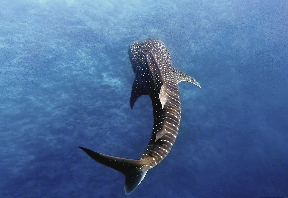 7 day 10 dive: Solo traveler Maldives scuba dive trip in Maalhos