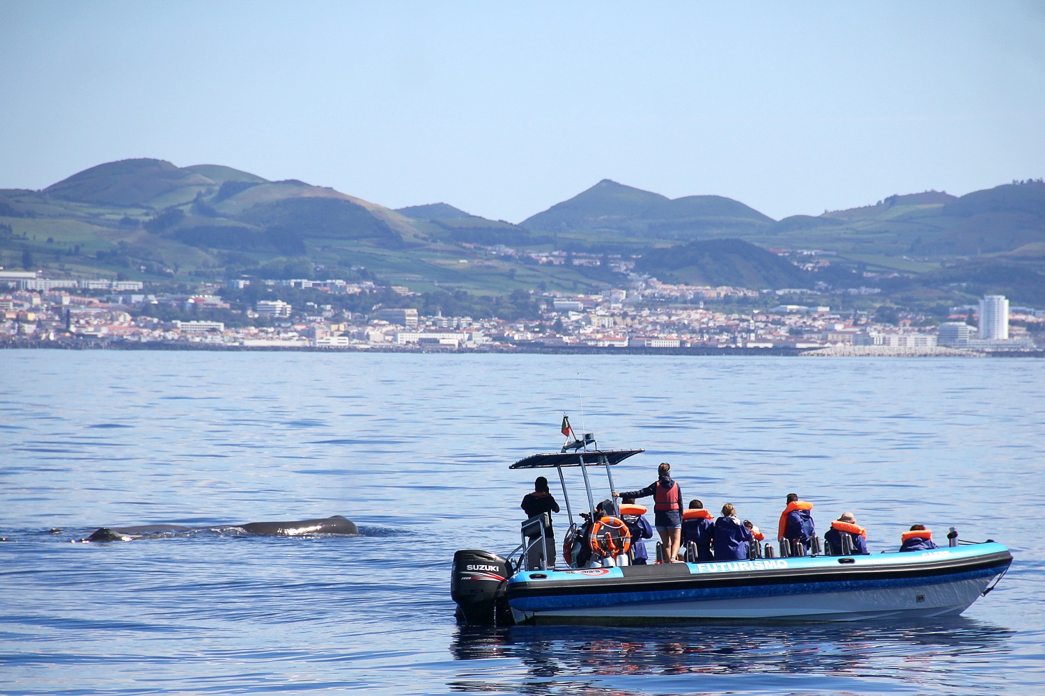 Atlantic Whale Watching & Dolphin Safari Day Trip in the Azores