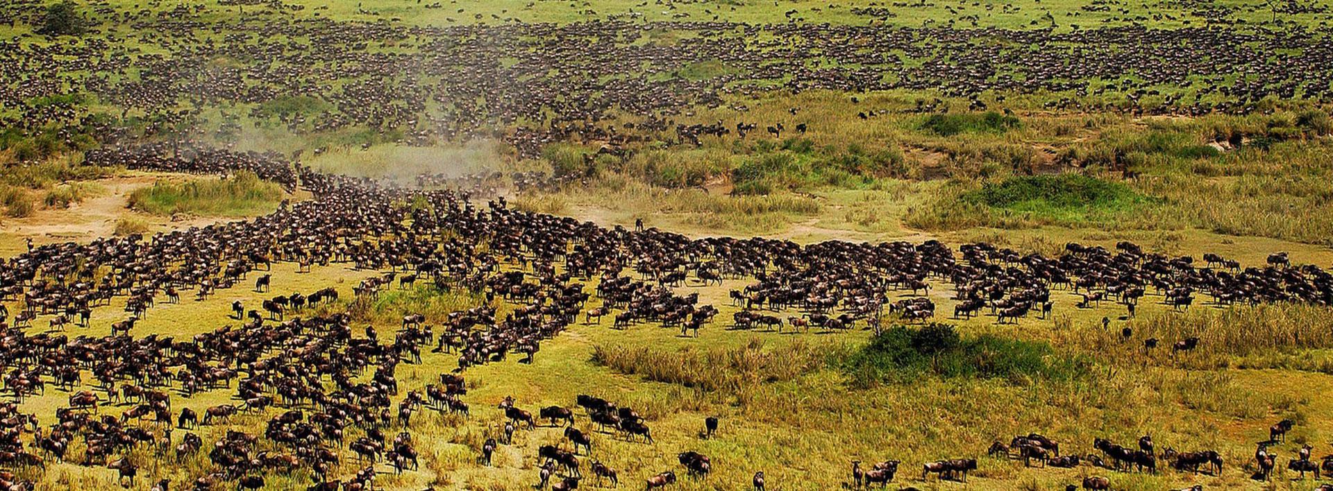 Budget African safari adventure in Tanzania: Big 5 & migration