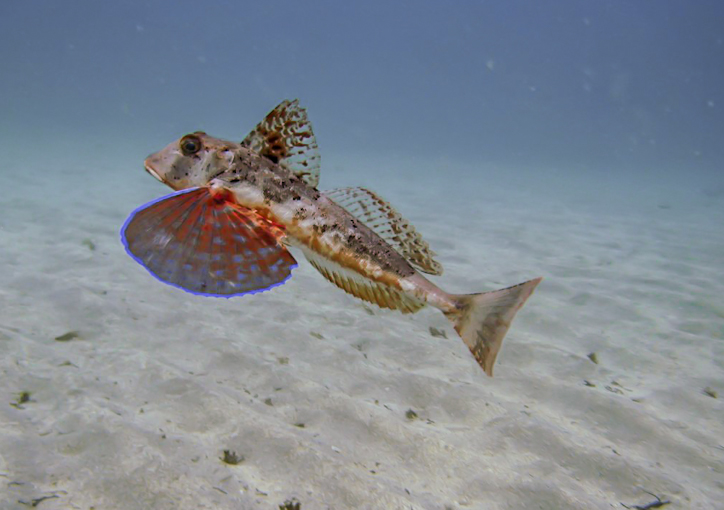 Scuba diving on the Costa Blanca: Scuba Dive in Spain