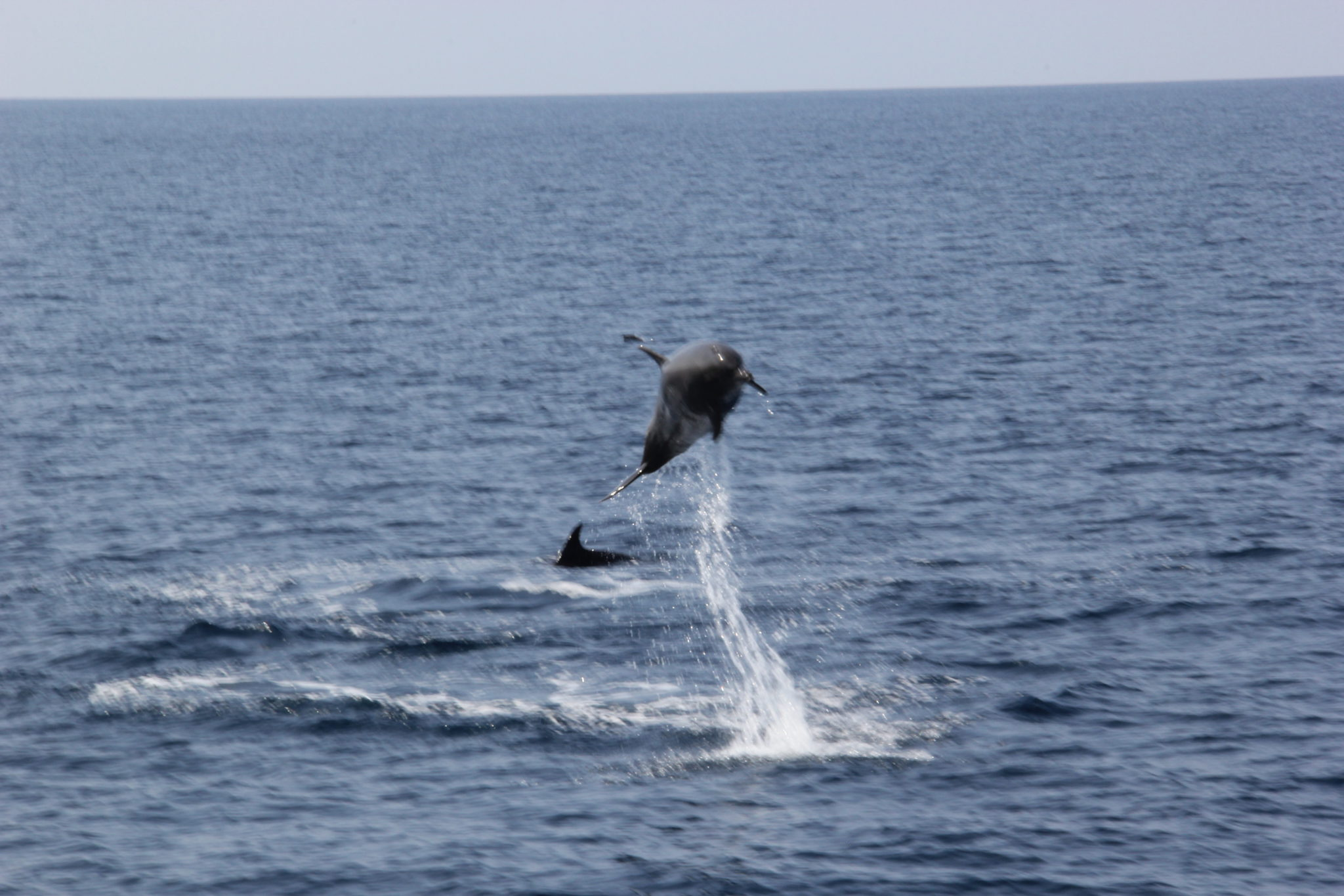 Elba Island whales and dolphins snorkeling experience in Italy