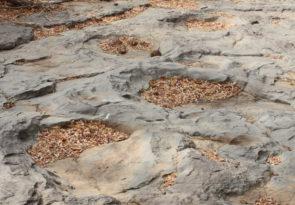 Africa Dinosaur Delights Safari in Zimbabwe