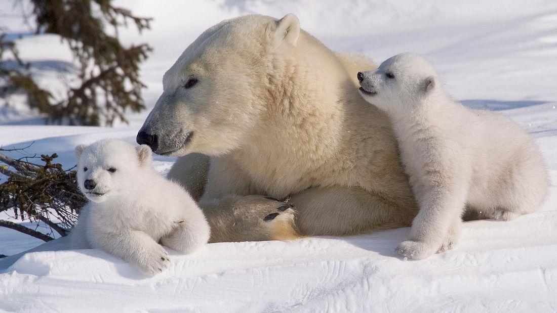 Arctic Day at Ranua Wildlife Park, Reindeer Farm & Husky Farm