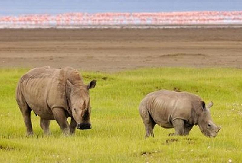 4 Days Maasai Mara & Lake Nakuru Safari in Kenya