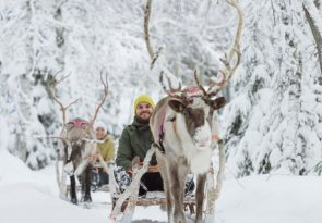 Lapland Forest Trail Reindeer Safari