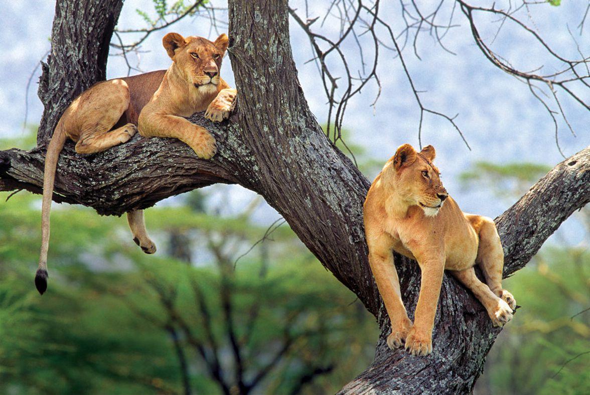 5 Day Tanzania wildlife safari lodge holiday in Africa