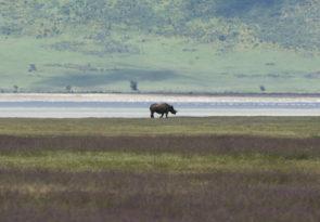 7 Day Tanzania Budget Lodge & Camping Africa Safari