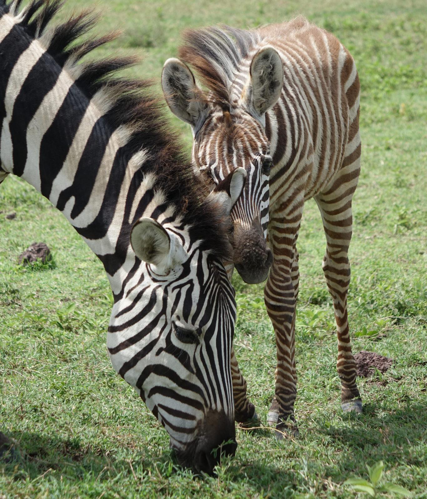 3 Day Ngorongoro Crater & Serengeti Park Africa Safari