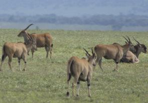 7-Day Tanzania Lodge & Camping Africa Safari
