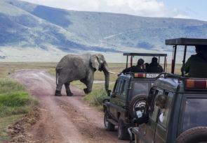 6 Day Tanzania Wildlife & Wildebeest Migration Africa Safari