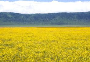 7 Day Serengeti Plain & Ngorongoro Crater Tanzania Safari