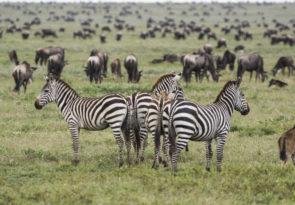 9-Day Tanzania Wildlife, Culture & Walking Budget Africa Safari