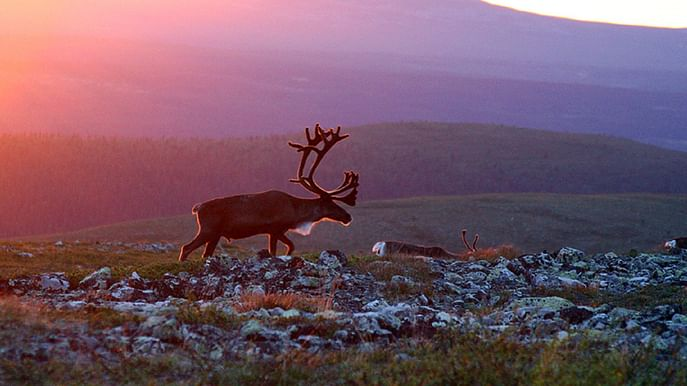 7-Day Midnight Sun multi activity holiday in Lapland, Finland