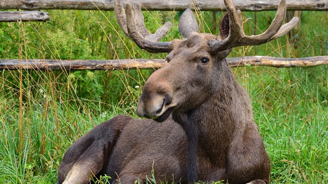 Arctic safari day trip in Finland: Ranua Zoo, Husky and Reindeer