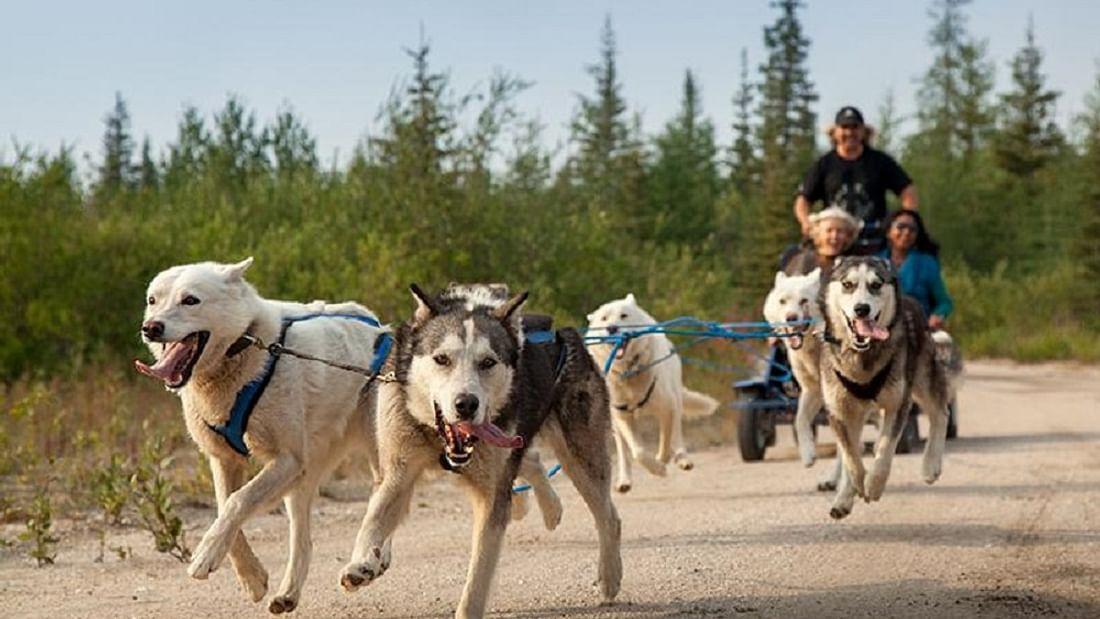 Autumn Lapland Husky Safari Adventure in Finland