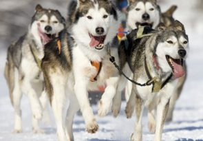 10Km Lapland Snowy Trails Husky Arctic Safari