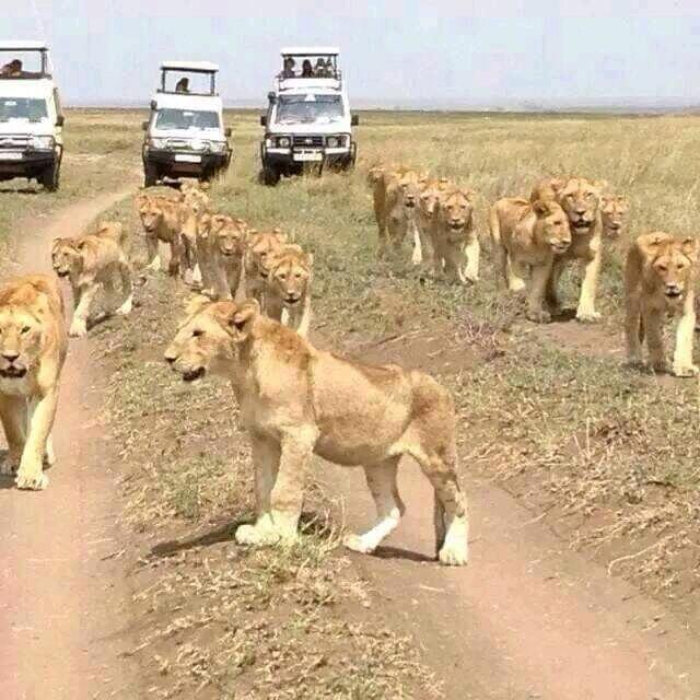Africa Tour: 3 days Masai Mara safari holiday in Kenya