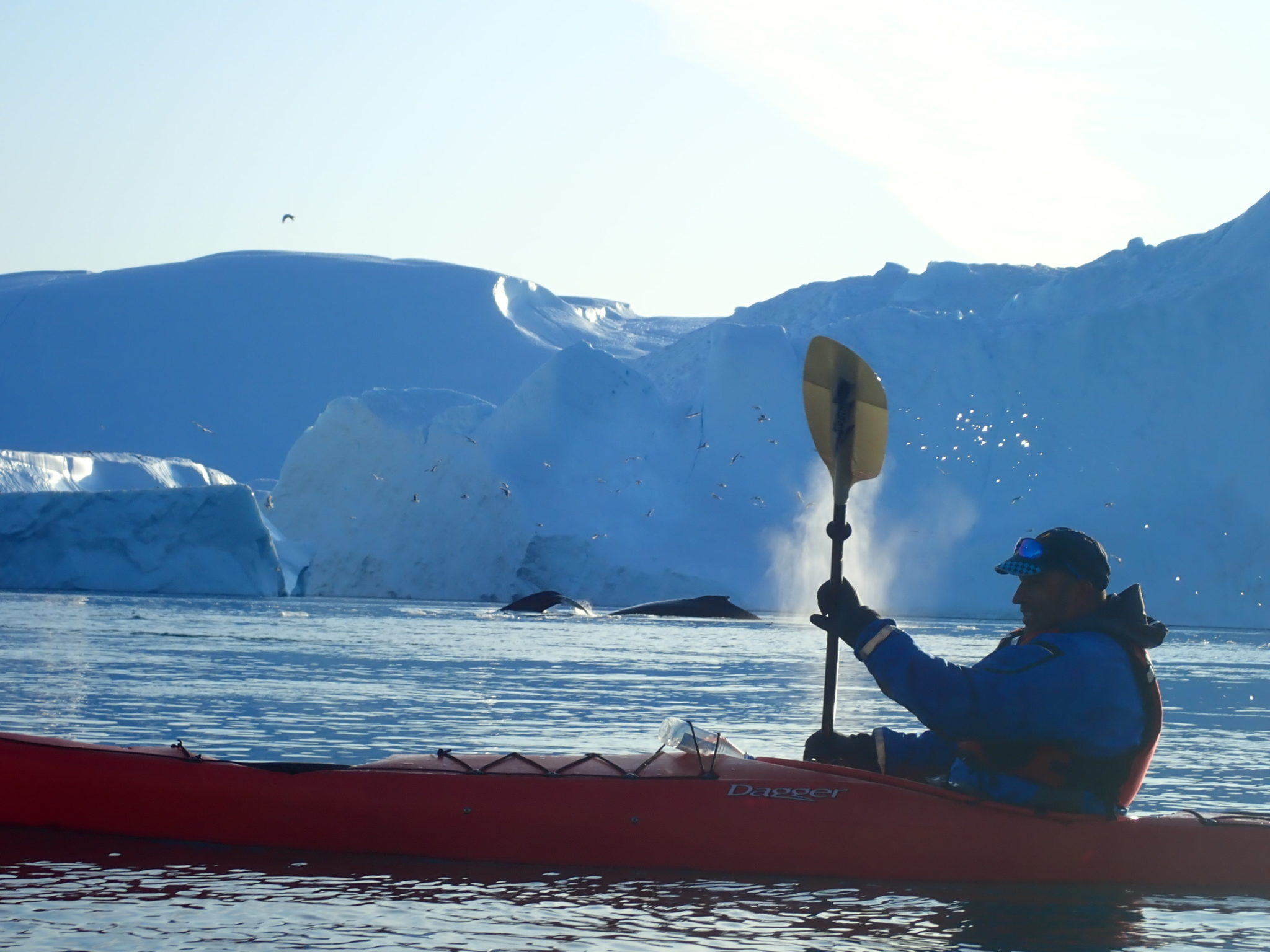 Evening Greenland kayaking experience in Ilulissat icefjord