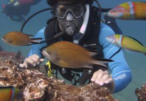 Gran Canaria Beginners Scuba Dive: Diving at the Canary Islands