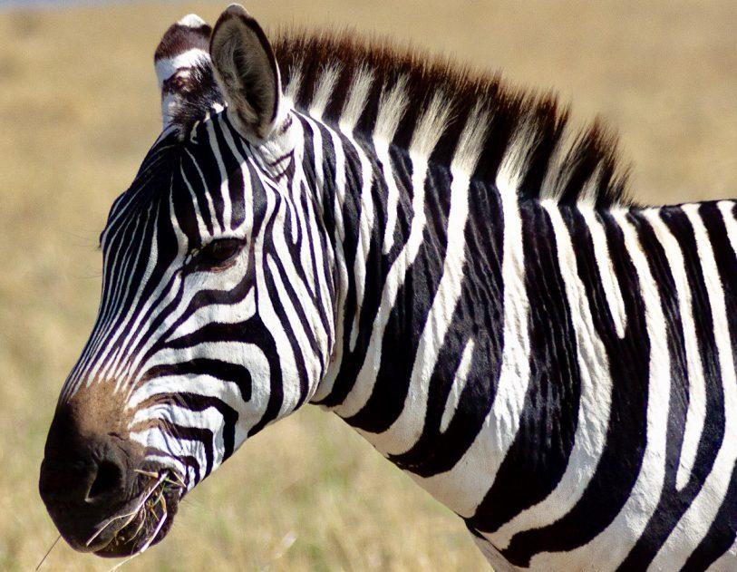 3 Day Budget Group Tanzania Safari Adventure in Africa