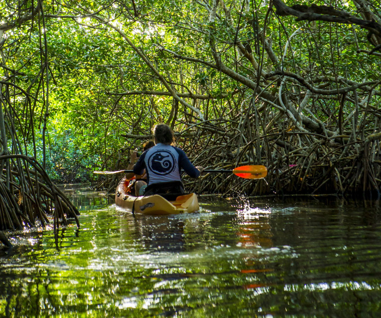 Full Day Kayak in Xcalak: Kayaking in the Mexican Caribbean