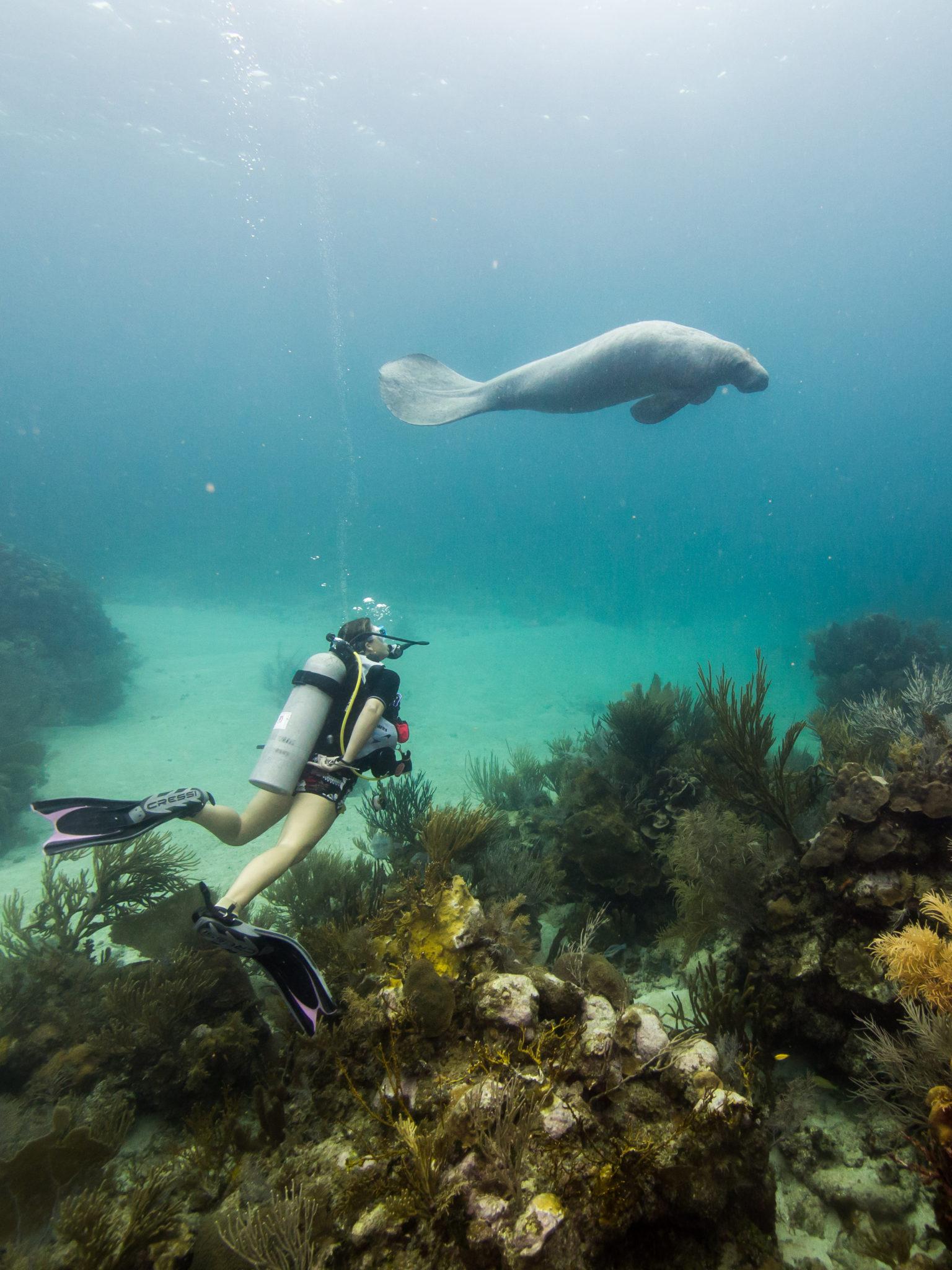 Mexico Discover Scuba Diving Course in Xcalak
